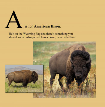 A is for American Bison.